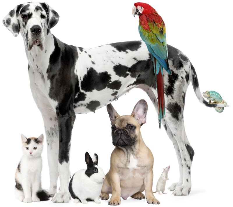 Chasing Your Tail - In-Home Pet Services - Argyle, TX – Mike Moon – 972.743.9616